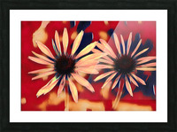 Two Coneflowers Picture Frame print