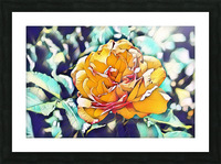 Rose in Yellow Picture Frame print