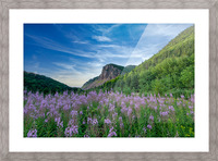 Fireweed at La Grand Falaise Picture Frame print