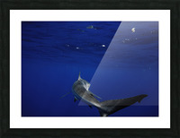 Silky Smooth Picture Frame print
