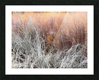 Willows Picture Frame print