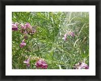 hummingbirdindesertwillow lrg Picture Frame print