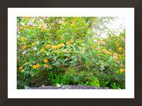 Wild Flowers Waimea Canyon Kauai Picture Frame print