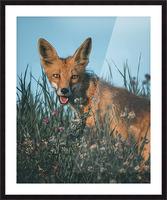 Fantastic Fox  Picture Frame print