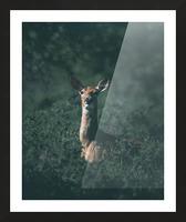 Bush Doe  Picture Frame print