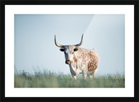 No Bull  Picture Frame print