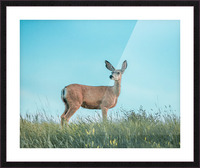 Doe  Picture Frame print