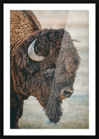 Cut the Bull Picture Frame print