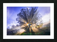 Rays of Light Picture Frame print