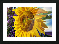 Sunflower Creative Picture Frame print