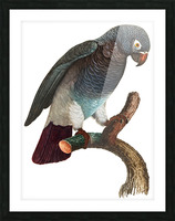 Macaw - Birds - Paradise - Tropical- Art Print - Wall Art - Parrot Picture Frame print