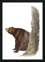 Bear Print Picture Frame print