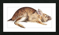 rabbit portrait   pet portrait   custom bunny portrait   custom dog portrait   animal lover gift   gift for her   gift for pet mom Picture Frame print