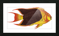 Vintage Fish Wall Art Prints  Picture Frame print