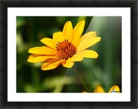 Sunny Side Picture Frame print