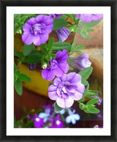 Purple Petals Picture Frame print