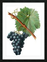 Grape Spanna Antique Art Kitchen Art Grapes Vintage Grapes Pic Grape Vine Grape Leaves Winery Spanna Grapes Wine Blued 02Element 3 Picture Frame print