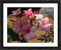 Pink Plumeria 2 Picture Frame print