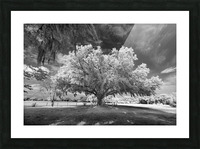 Gentle breeze Picture Frame print