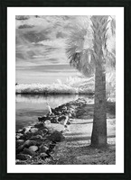 Wabasso Causeway with great white heron Picture Frame print