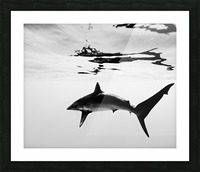 B&W Silky  Picture Frame print
