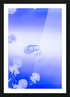 Jellyfish Picture Frame print