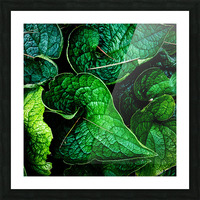Garden Leaves Picture Frame print