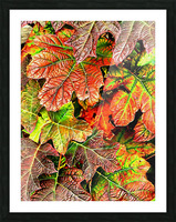 Oak Leaved Hydrangea In Autumn Picture Frame print