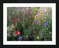 English Cottage Garden Flowers 2 Picture Frame print