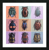 Assorted Beetles Picture Frame print