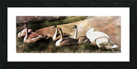 Swan Family Picture Frame print