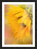 Bring Sunshine - Sunflower Art by Jordan Blackstone Picture Frame print
