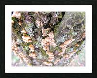 Nature Impression et Cadre photo