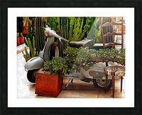 Vespa As Part Of Succulent Display Picture Frame print