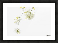 White spring Picture Frame print