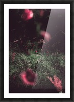 Redness  Picture Frame print