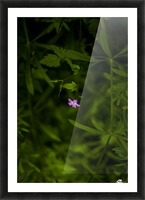 Under great big Sun Picture Frame print