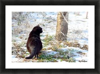 Cat in a sunny frozen garden Picture Frame print
