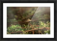 Forest life Picture Frame print