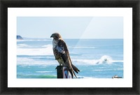 hawk Picture Frame print