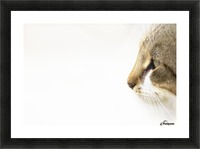 Eyes of prey Picture Frame print