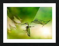 Emerald Hummingbirds Picture Frame print