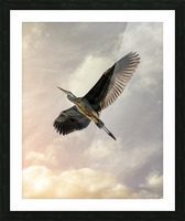 Flight Of The Heron Picture Frame print