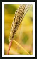 Flamboyantes Graminees no. 6 - Flamboyant Grasses no. 6 Impression et Cadre photo
