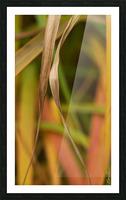 Flamboyantes Graminees no. 5 - Flamboyant Grasses no. 5 Impression et Cadre photo