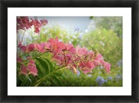 Nature - 02 Picture Frame print