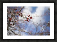 Berries Picture Frame print