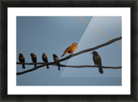Birds on the Wires Picture Frame print