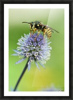 Country Wasp Picture Frame print