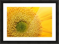 Sunflower Picture Frame print